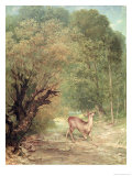 The Hunted Roe-Deer on the Alert  Spring  1867