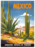 Cacti  Mexico