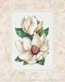 Fleur du Jour  Magnolia