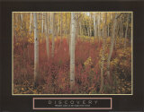 Discovery: Aspen Trees
