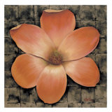 Exotic Magnolia