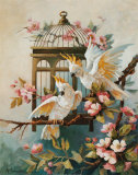 Cockatoo and Blossoms