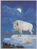 White Bison