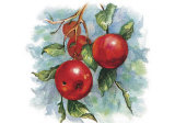 Four Apples on a Branch