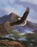 Eagle Gliding