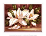 Blossoming Magnolias