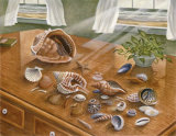 Seashells II