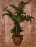 Potted Palm II