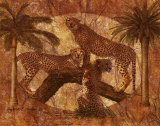 Jungle Cheetahs