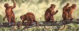 Monkey Time I