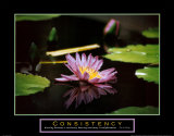 Consistency: Pond Flower