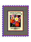 Strawflower Seed Pack