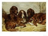 Shot and His Friends  Three Irish Red and White Setters  1876
