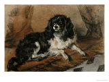 A King Charles Spaniel