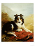A Collie  the Guardian of the Flock  1908