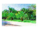 Palms in the Landscape - Miami Beach  FL - USA