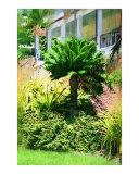 Cycad Oil painting  Fairchild Tropical garden  Miami  Florida