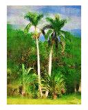 Roystonea regia  royal palm tree - Tropical Collection - Palms & Landscape   Miami   FLorida