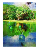 Everglades palm tree - Tropical Collection - Palms & Landscape   Miami   FLorida