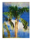 Tropical Palm tree - Tropical Collection - Palms & Landscape   Miami   FLorida