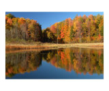 Autumn Evening  McLean Swamp