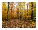 Autumn Stroll in Sapsucker Woods