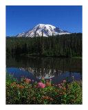 Mt Rainier's Garden