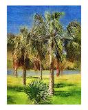 Copernicia palm tree