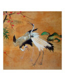 Dancing Cranes