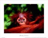 Histoires de singes Reproduction d'art