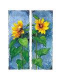 Zwei Sonnenblumen