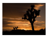 Sunrise in Joshua Tree National Park  California