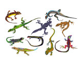 Lizards and Geckos