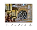 Paris  Streetlight Cathedral