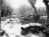 Snow Fallen Around Stream
