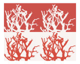 Red & White Coral