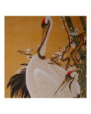 Japanese Cranes II