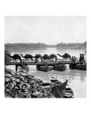 Camels of the Banks of  Euphrates River  Kufa