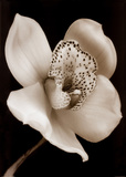 White and Black Speckled Flower