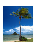 Palm Tree in Kaneohe Bay  Oahu