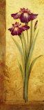 Grandiflora I