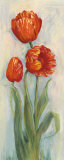 Rembrandt Tulips