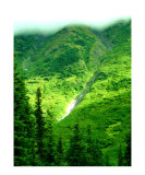 Summer in Chugach National forest  Alaska