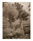 Infrared Beach Trees - Cumberland Island  GA