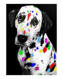 multi-colored dalmation