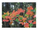 Burst Of Autumn