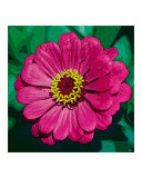 Pink Flower w/ Yellow Stars