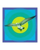Naples Seagull
