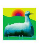 Long Island Duck
