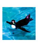 Roman Penguin